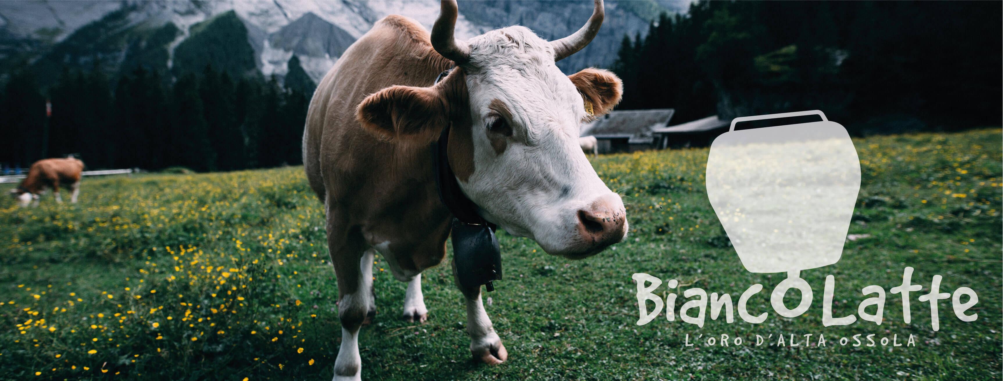 BiancoLatte: una merenda sinoira per celebrare l'Oro d'Alta Ossola 3